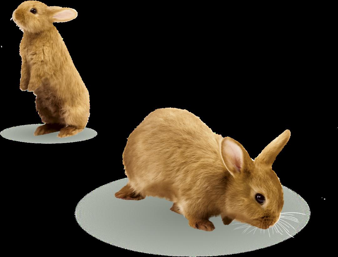 contact-us-rabbits