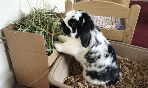 hay-rack-bunny