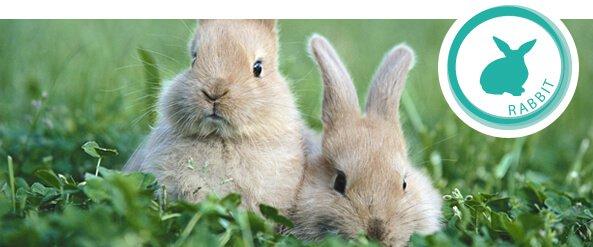 rabbits-feeding-guide