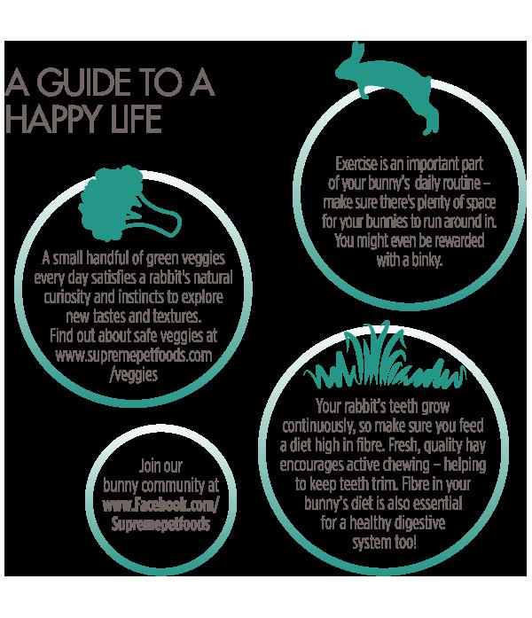 Adult-Rabbit-Happy-Life-Guide
